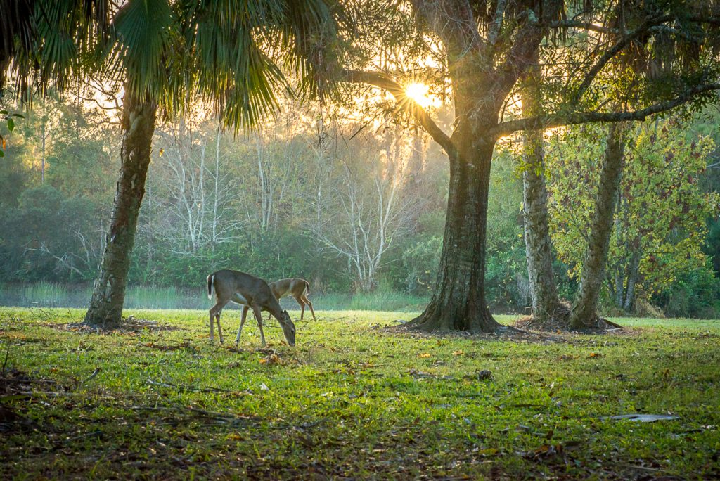 Photography Workshops in Palm Beach County
