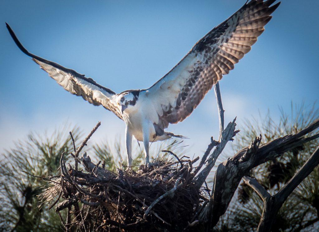Osprey Photography Owl Photography Photo Masters Workshops