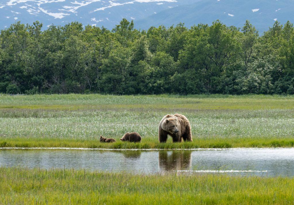 Photo Workshop Alaska Brown Bears and Bald Eagles